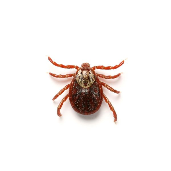 tick control services in College Park